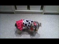 Homemade Halloween Costume For Dogs