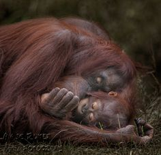 Unconditional by Aya de Ruiter on 500px