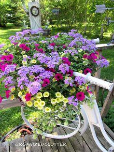 plant, garden ideas, color combos, garden bike, bicycl, annual flowers, bike basket, old bikes, flowers garden