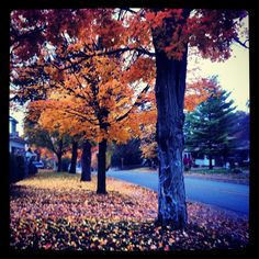 Autumn in small town Ontario, Canada. Photo by Anne Haapanen.