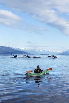 Kayak whale watching #kayak #kayaker #kayaking #kayaks #whale
