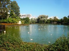 #PalomaPark #Spain One of my favorite spots. They have ducks, peacocks, birds, rabbits all moving freely in the park. Such a beautiful and peaceful park. #andreacatsicas