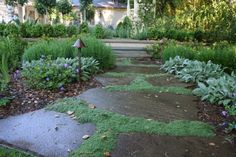 moss ear, pathway, landscaping design, yard, lamb, landscape lighting, landscape designs, garden, stone walkways