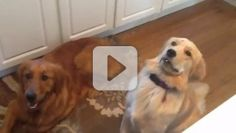 Faith-based videos with uplifting and inspiring messages. From cuddly puppies to cute kids, this is your place for faith-filled entertainment.