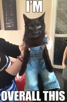 I have build a bear overalls! I'm immediately putting them on my cat!!
