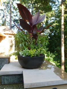 Entryway plants on Pinterest