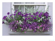 Lovely window box filled with varying shades of purple and lavender