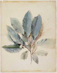 Chestnut Leaves, c.1870 Prints by John Ruskin | Magnolia Box
