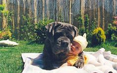 Babies + Dogs