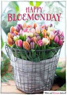 Happy BloeMonday!  #flowers #bloemen #BlueMonday #BloeMonday