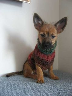 Beyond cute!! This little doggie will be nice and warm this winter