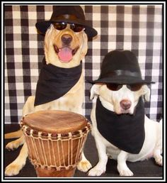 Blues Brothers Dog Costumes