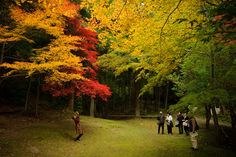 Another Day of Amazing Fall Colors in Kyoto