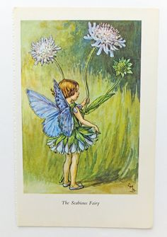 Scabious Fairy Picture, Flower Fairy, Cicely Mary Barker £4.50