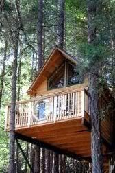 Tree Houses On Pinterest Tree Houses Tree House