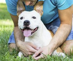 10 Things Dogs Can Teach Us About Relationships