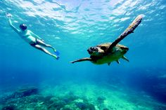 free diving with turtle