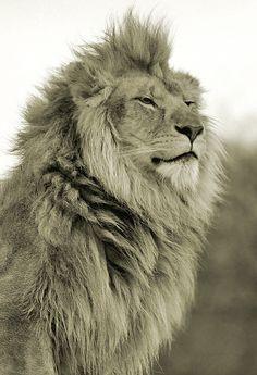 King. S)