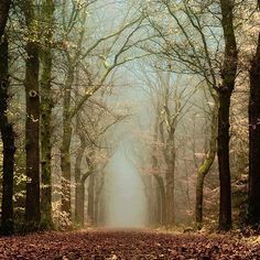 Mystic or the Mystical forests in Netherlands looks breathtaking with colourful leaves all around and the shades of light as the Sun sets and rises. Mystic, Forests, Tree, Dream, Path, Places, Road, Netherlands, Falling Leaves