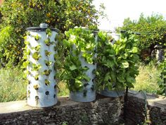 PVC pipe garden tower.