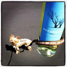 Take a sip and walk the dog!