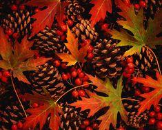 Fall mix