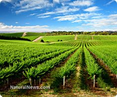 French Govt Threatens Organic Winemaker with JAIL for Refusing to Use #Pesticide | #Organic #Activist #News #naturalnews @LaLaRueFrench75