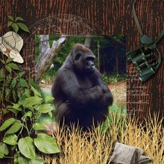 Zoo pictures.  Kit used:  Wild Thing by Manu Scraps and Jilbert's Bits of Bytes available at http://www.digitalscrapbookingstudio.com/store/index.php?main_page=product_info&cPath=535&products_id=30167