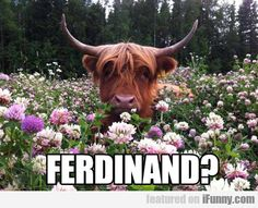 Ferdinand? How I loved the story about the pacifist bull :)