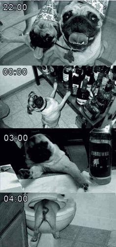 funny animals | Tumblr