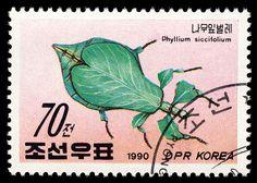 Phyllium siccifolium, Korea, 1990