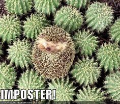 IMPOSTER!!!