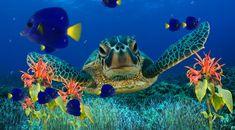 computers, anim, seas, aquariums, fish, marines, desktop wallpapers, sea turtles, coral reefs