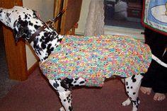 Crocheted doggie sweater -