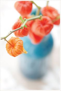 chinese lantern.  love the orange color of this flower.