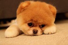 The Saddest Dog