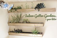 How-to: Maintain an Indoor Gutter Garden