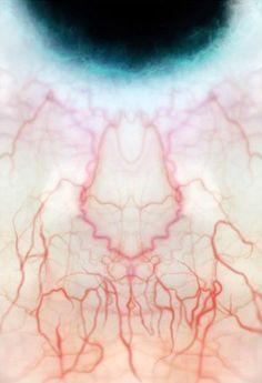 blood vessels of the eye