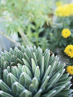 Deer-Resistant Plants for the Desert Southwest