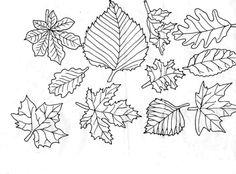 feuilles d'arbre à colorier