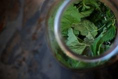 stinging nettle infusion with mint & clover (a variation on the plain nettle tea I've been making)