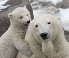 chewing on mom's ear