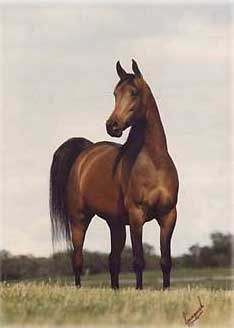 Kajora (Kaborr x Edjora) A 1979 Arabian mare who was U.S. National Champion mare as well as being the dam of the super sire Gazal Al Shaqab.