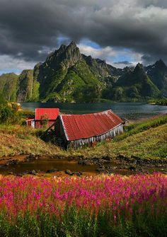 SCANDI STYLE - Summer colors and flowers around the fjord at Svolaer, Norway