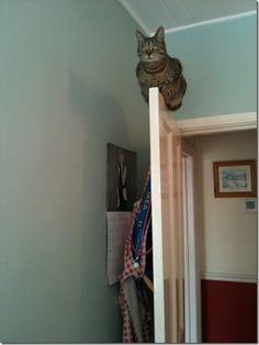 Cat on Door