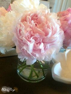 When to Plant Peony Flowers!!