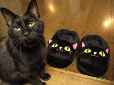 Not amused funny animals, kitty cats, funny pics, slipper, funny pictures, funny cats, funni, black cats, funny quotes