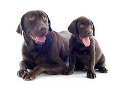 Dog Ear Mites: Symptoms and Treatment
