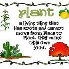 15 Vocabulary Posters for a Plant Unit    -plant  -stem  -flower  -leaf  -roots  -petal  -seed  -cotyledon  -plant embryo  -seed coat  -germination...
