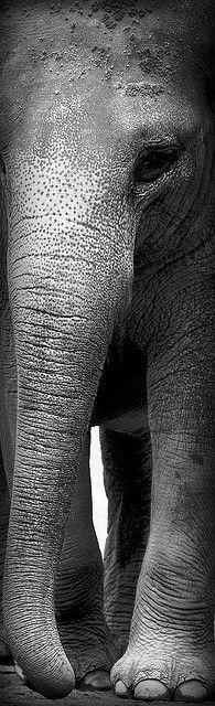 So Gentle  Wise. #elephant #wild #animals